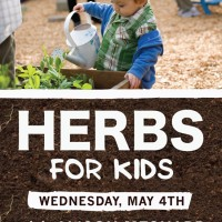 Herbs-For-Kids-21